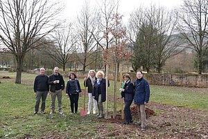 Baumspende des Rotary Club Römische Weinstraße für die Kulturgeschichtliche Begegnungsstätte in Föhren